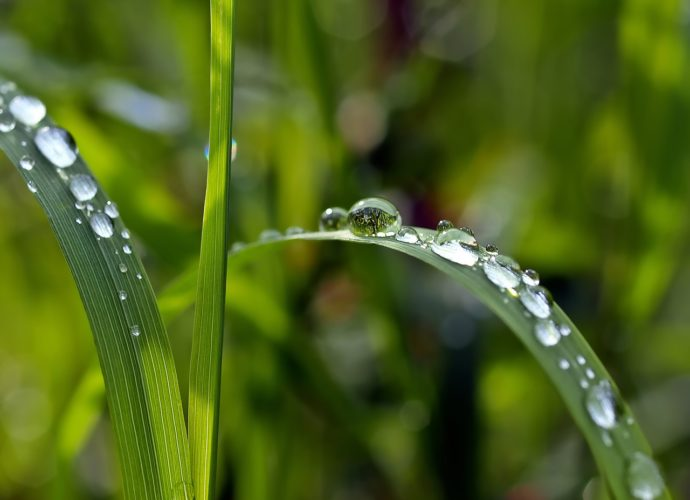 Esővíz